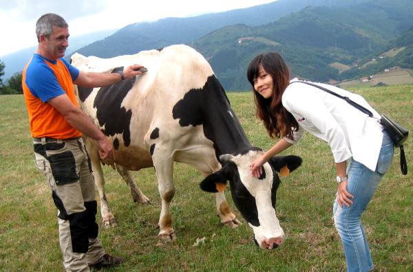 china-vaca-1