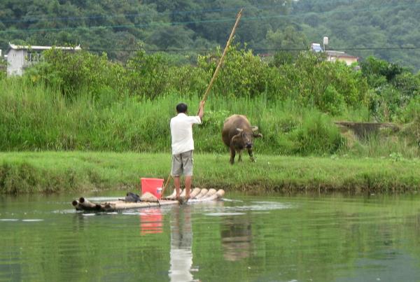 pescador-buey-yangshuo-1